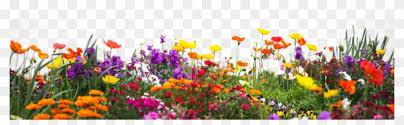 flower garden png hd clipart 502375