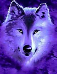 Pin by Adele Walters on Wolves | Wolf spirit animal, Wolf photos, Wolf  painting