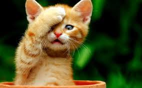 صورة حيوانات مضحكة