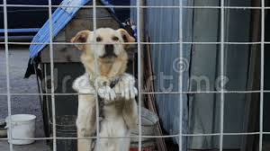 The Dog Is Barking Behind A Fence Stock Footage Video Of 1080 Attack 61463876