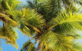 تحميل خلفيات سعف النخيل السماء الزرقاء الجزر الاستوائية أشجار