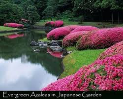 plants for japanese gardens singing