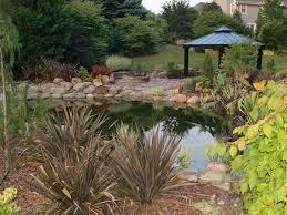 garden pond tips for removing