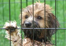 home size small dog rescue