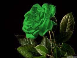 صور الورد الاخضر