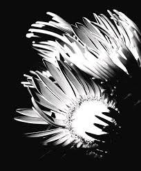 Seek the Light Photograph by Karin Smith