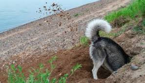 Solutions To Stop Dog Digging Under Fence Bark How