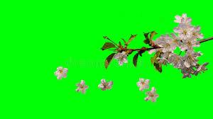spring flowers falling stock fooe
