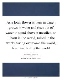 as a lotus flower is born in water grows in water and rises out
