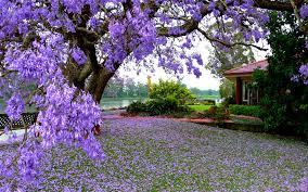 صور عن فصل الربيع 2017 رمزيات وخلفيات الربيع ميكساتك