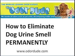 dog urine smell permanently