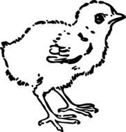 pollitos en caricatura imágenes para