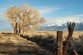 Winter Landscape With Rustic Wood Fence Post At Entrance To Rural Dirt Road With Brown Tree And Brown Grass In Desert Valley With Snowy Mountain Range In Distance California Scenery Stock Photo