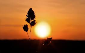 sunset sunrise landscapes nature