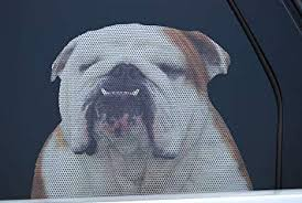 Amazon Com Doggie In The Window Car And Truck Window Dog Decal Bulldog Home Improvement