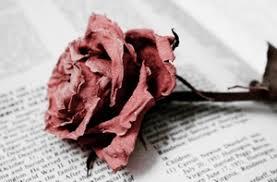 every rose has its thorn hari ini