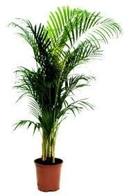 top 10 eco friendly houseplants by nasa