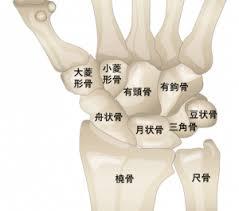 「舟状骨骨折」の画像検索結果