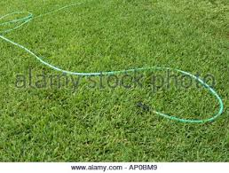 a green hose lying on the grassy ground