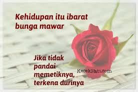 kata kata cinta ibarat bunga mawar