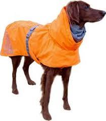 200 Dog Gear Ideas Dog Gear Dogs Diy Dog Stuff
