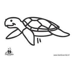 Knutseltips Kleurplaten Knutselen Schildpad