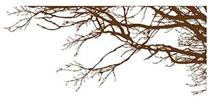 Stickerbrand C Nature Vinyl Wall Art Tree Buy Online In China At Desertcart