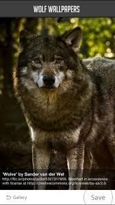 wolf wallpaper na app