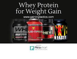 using whey protein for weight gain