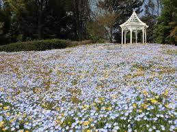 nagoya port wildflower garden