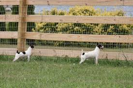 How To Stop Dog Fence Fighting American Kennel Club