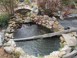 Please Let Me Know If My Turtle Habitat Is Suitable Big Pond Turtle Forum