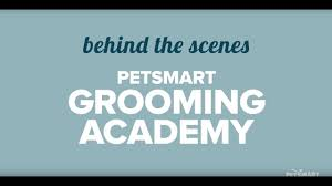 dog grooming cat grooming services