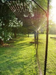 The Purr Fect Fence Violetpaws