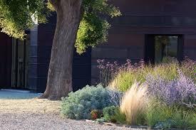 planting drought tolerant garden