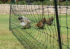 Electric Poultry Fencing Great For Your Chicken Flock