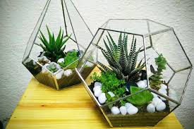 get indoor plants for your home