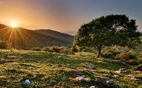 تحميل خلفيات الصورة الجبال غروب الشمس شجرة كبيرة عريضة