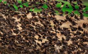 bando de pássaros 2560x1600 hd imagem