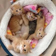 صور كيوت قطط 2 عالم القطط Miaw Miaw