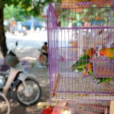 tips for mainning a clean bird cage