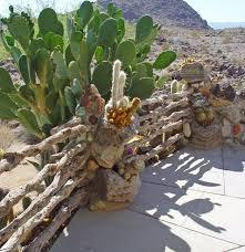 best water wise desert plants garden