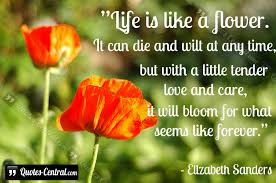 quotes about life like a flower quotes