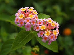 أزهار نادرة جميلة أي زهرة هي الأجمل في العالم