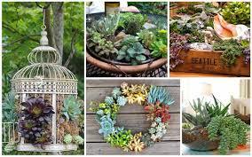 25 indoor and outdoor succulent gardens