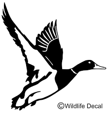 Duck In Flight Decal Md 1001 Wildlife Waterfowl Hunting Stickers Wildlife Decal