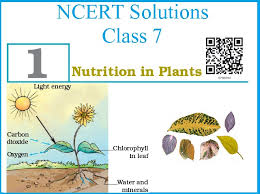 ncert solutions for cbse 7th science