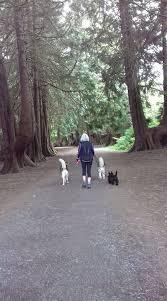 Hilda's Dog Walking Service - 15 Photos - Pet Sitter - leitrim village,  Leitrim, Ireland 0000