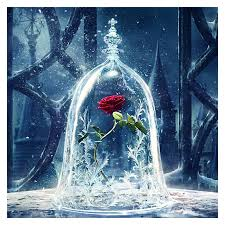 beauty and the beast rose wallpapers on