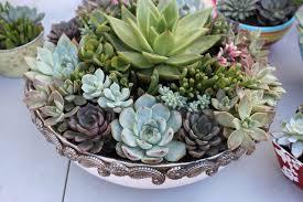 holiday gift idea succulent gardens